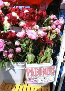 dunedin market-flowers